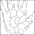 Vein net image / palm outline