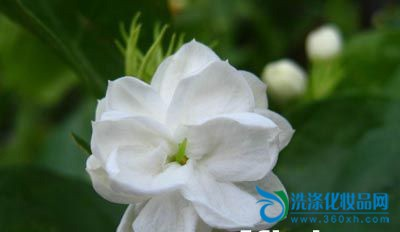 Natural ancient beauty method, flowers care for the skin