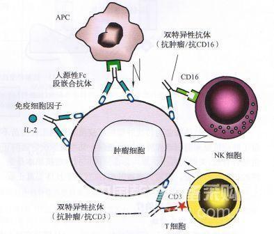 "PNAS: Bacterial ""antenna"" discharges promising new bio-batteries"