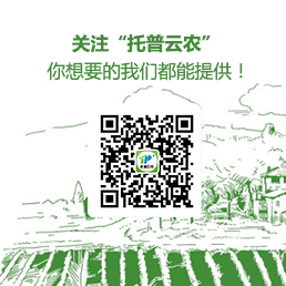 Top Service WeChat QR Code
