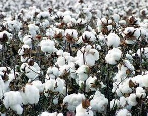 Domestic and overseas cotton price spreads