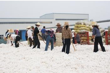 High-quality cotton lack of spot prices