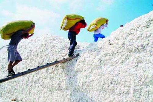 March Australian cotton exports decline