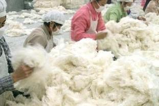 Spot cotton prices fell slightly on September 4th