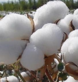 In the year of change, where is the cotton market?