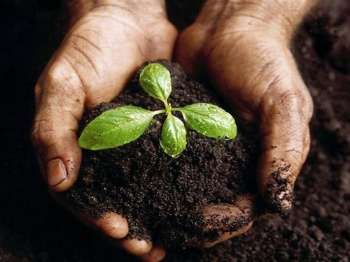 There will be six changes in the domestic chemical fertilizers
