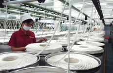 """The industry calls for the start of """"direct subsidies"""" for cotton"""