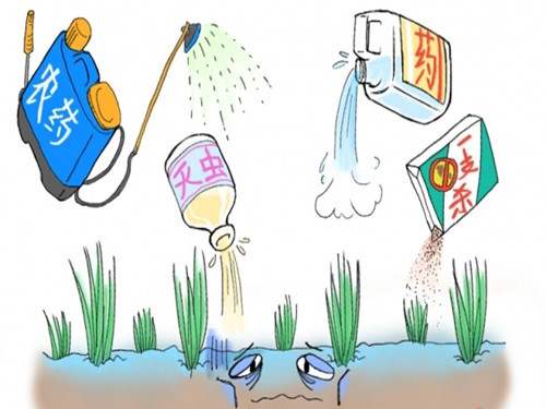"""The """"pain"""" of pesticide management in big agricultural countries"""