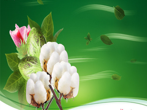 """Quality """"Department"""" upgrade Textile enterprises are eager to fully improve domestic cotton"""