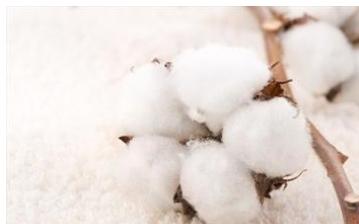 Cotton prices are still sluggish