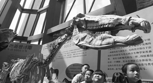 China's first exhibition of foreign fossils