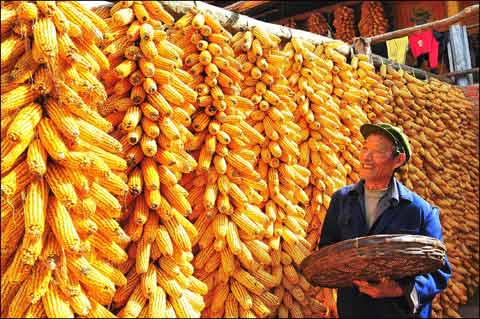 Increase the production of corn in the country instead of raising the price