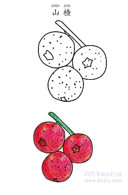 Hawthorn's stick figure and coloring (fruit)