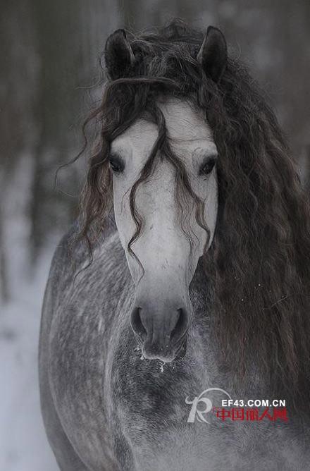 万马奔腾 福满新年 NAERSILING和您一起迎马年