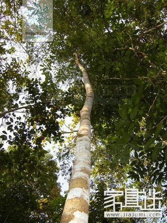 Yunnan black rosewood.Jpg