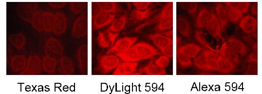 Dylight-3.jpg