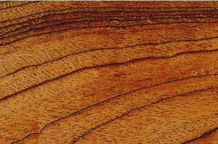 Tabby wood panel