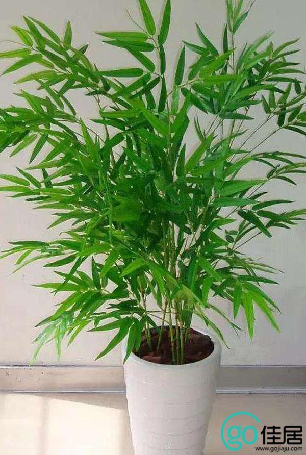 凤尾竹怎么养殖