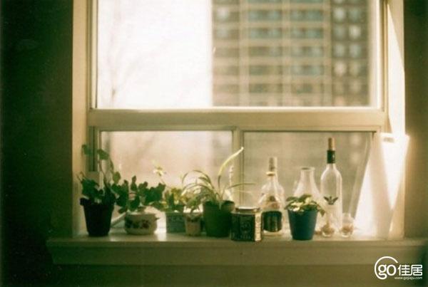 窗户前适合摆放哪些植物