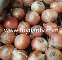 Wholesale new yellow onions