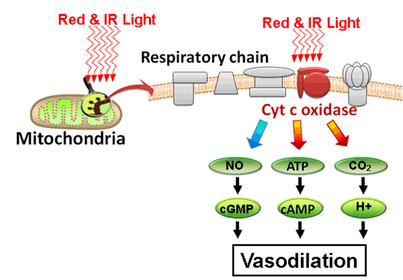 красный свет терапия.png