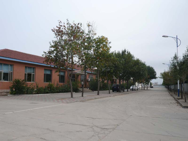 Shijiazhuang S D Company Ltd.