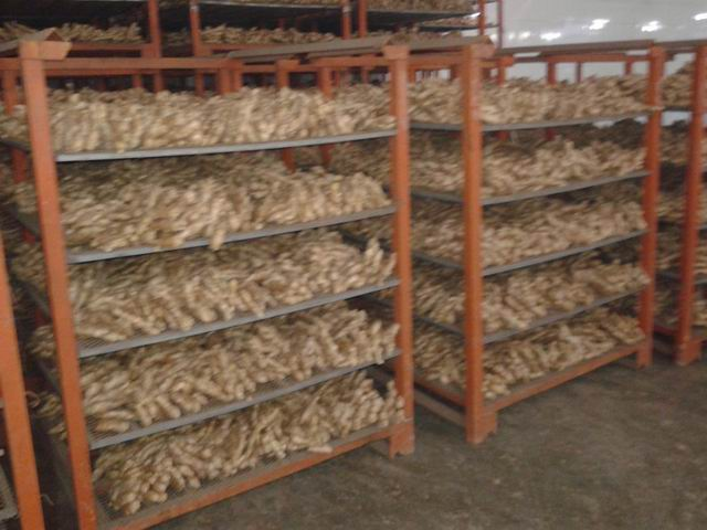 Air dried ginger 300g and up 10kg/plastic box