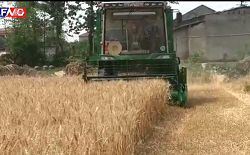 wheat harvester working video
