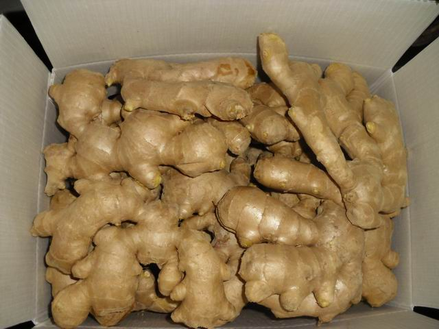 Air dried Ginger Fresh Ginger