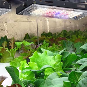 LED Grow Lights, Full Spectrum Panel Grow Lamp LED Plant Lights for Indoor Plants