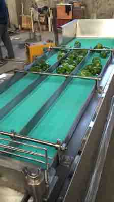 vegetable cutting machine 2-4 chilli powder processing line