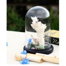 Vente en gros de cloison en bois Bell Jar Ensemble de dôme en verre fleur