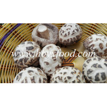 White Flower Magic Mushrooms Dried