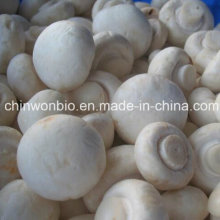 Champignons boutons Agaricus Bisporus Powder
