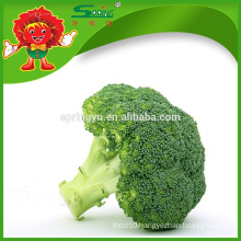 Wholesale organic green vegetables IQF broccoli