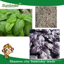 Suntoday Asian vegetable hybride F1 Organique vert violet basilic l'eau plantant des graines (81005)
