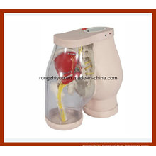 Buttocks Intramuscular Injection Medical Simulator and Comparison
