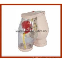 Ягодицы Внутримышечные инъекции симулятор медицинские и сравнения