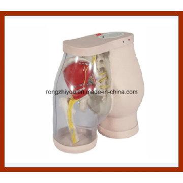 Gesäß Intramuskuläre Injektion Medical Simulator und Vergleich