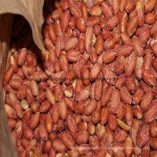 Kernel de cacahuètes frites, cuites et salées