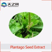 100% Natural Plantago Seed Extract powder for curing hypertension