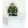 High quality potted artificial mini cactus plant decoration indoor for house