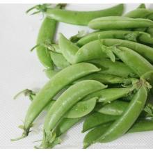 HPE03 Sejian OP graines de pois sucrés verts en graines de légumes