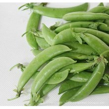 HPE03 Sejian ОП зеленый сладкий семена горох на семена овощных культур