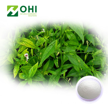 Andrographis Paniculata Chiết xuất Andrographolide bột
