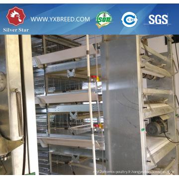 Équipement en acier de volaille de cage de poulet de Q235 pour la couche ou le gril