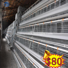 Chicken  Layer Cage  Full Automatic System Line