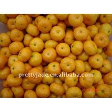 Baby Mandarin aus China
