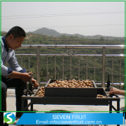 Pensijilan ISO dan jenis Walnut walnut keseluruhan di Shell