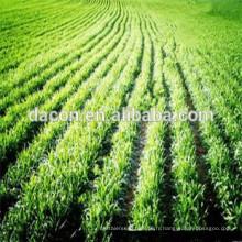 poudre de jus de wheatgrass (vrai fabricant)
